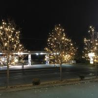Three Pear Trees in Mansfield, MA